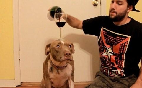 Kinh ngạc với hình ảnh chú chó dùng đầu giữ thăng bằng ly rượu 1