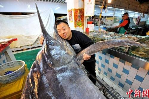 Bắt được cá kiếm dài 4 mét, nặng hơn 300 kg ở Trung Quốc 3