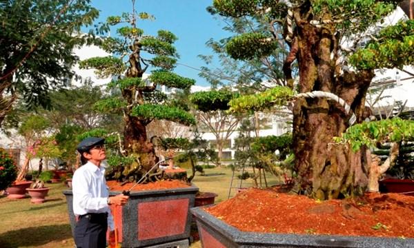 Đại gia Tây Ninh rao bán vườn cây cảnh giá 170 tỷ đồng 1