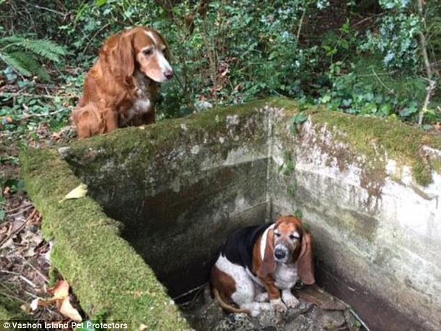 Cảm động cảnh chú chó đứng canh cho bạn bị rơi xuống hố suốt 1 tuần 1