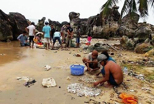 Hải sâm dạt đầy trên bãi biển Phú Quốc 1