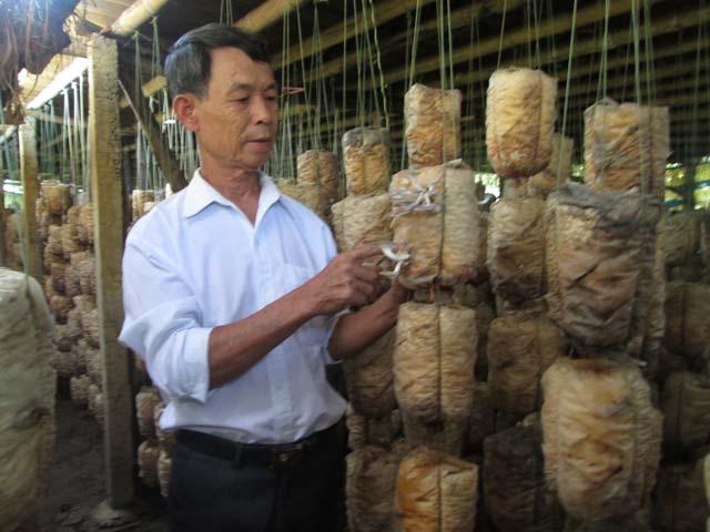 Làm chủ trang trại nấm, thu hơn trăm triệu/năm 1