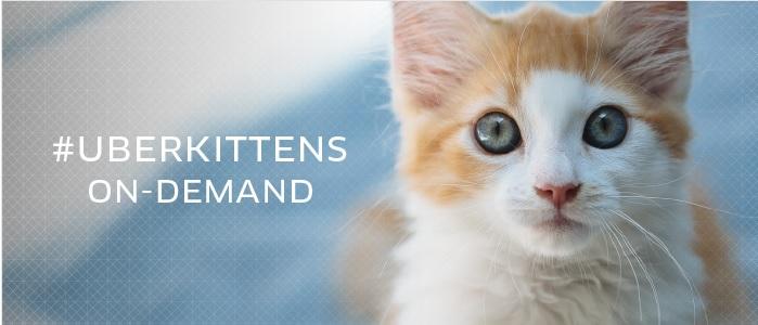 Mở dịch vụ nuôi chung thú cưng, kiếm 190 tỷ đồng 1
