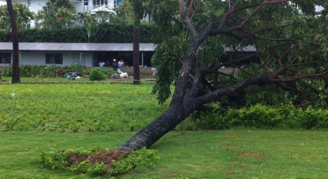 Hình ảnh 600 cây xanh đổ ở Đà Nẵng là do trồng ẩu số 1