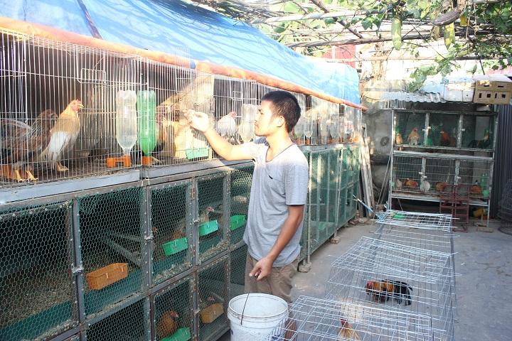 Trưởng phòng bỏ việc nuôi gà, thu gần 100 triệu/tháng 1