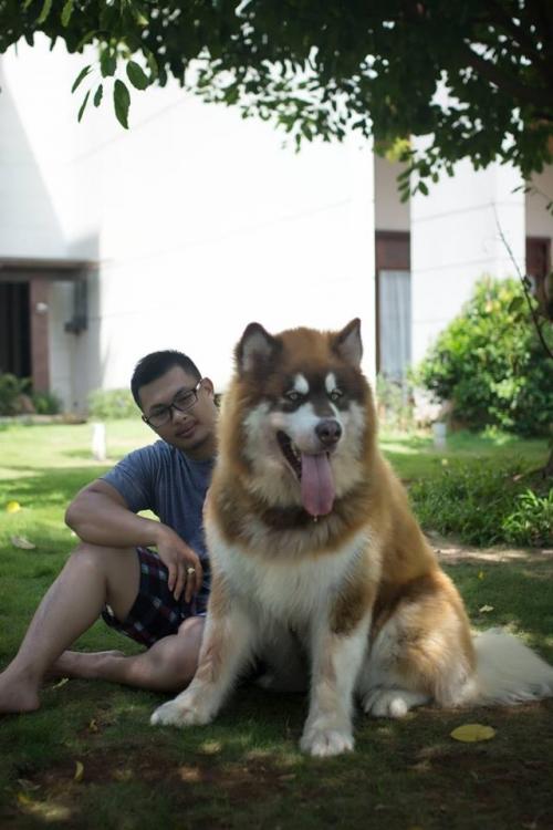 Hình ảnh Chú chó khổng lồ bênh chủ khi bị vợ đánh số 1