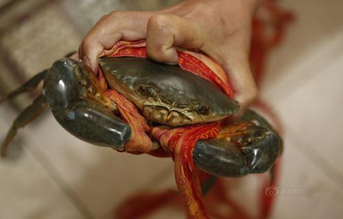 Quấn dây thừng 31m để tăng cân nặng cua biển 1