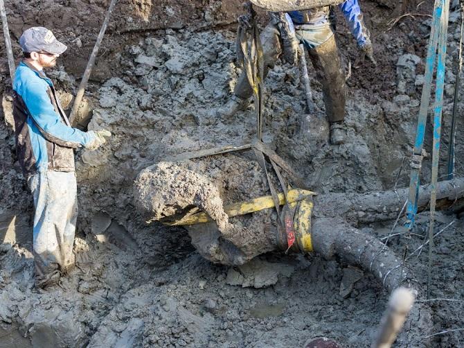 Xương voi ma mút khổng lồ được nông dân phát hiện tại Mỹ 4