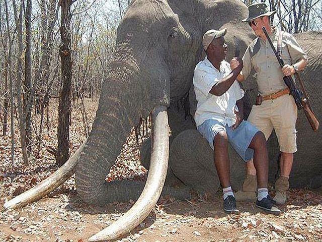 """Thợ săn chi 1,3 tỷ để """"hạ"""" chú voi lớn nhất châu Phi 3"""