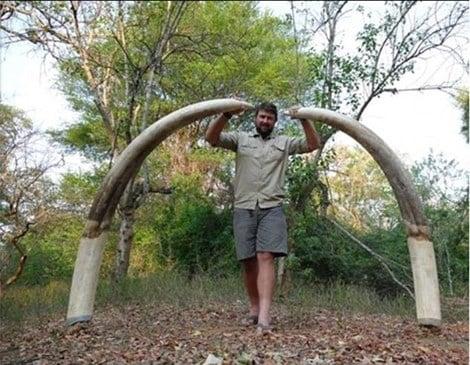 """Thợ săn chi 1,3 tỷ để """"hạ"""" chú voi lớn nhất châu Phi 2"""