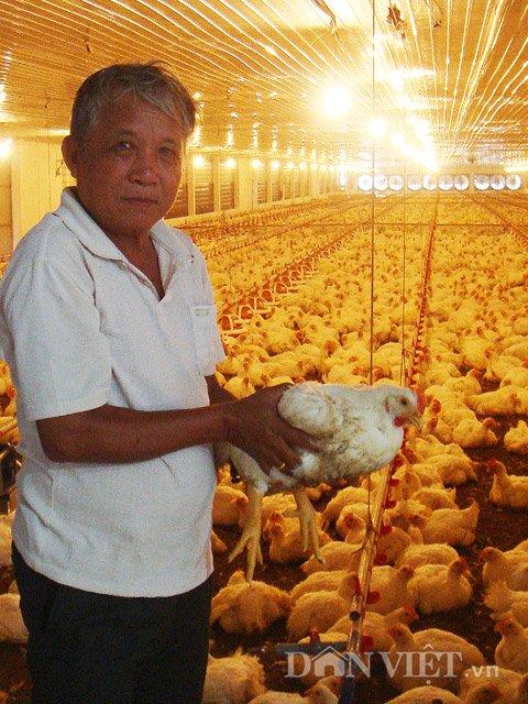 Nông dân thu lãi 3 tỷ mỗi năm nhờ trang trại gà 3