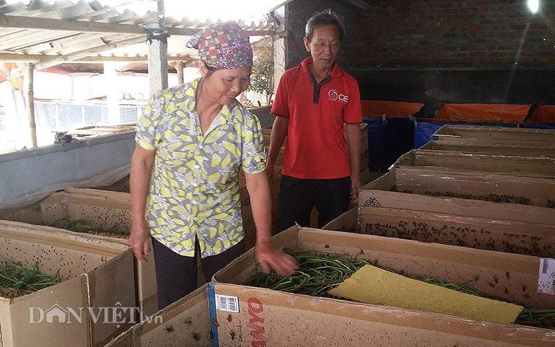 Từ nông dân nghèo thành triệu phú nhờ dế 2