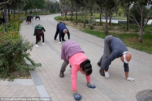 Trung Quốc: Trào lưu kỳ lạ, tập thể dục bằng phương pháp… bò  1