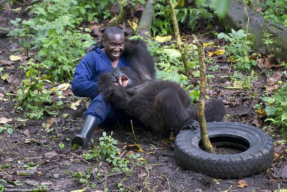 Tình bạn giữa khỉ đột khổng lồ và con người ở rừng sâu 8