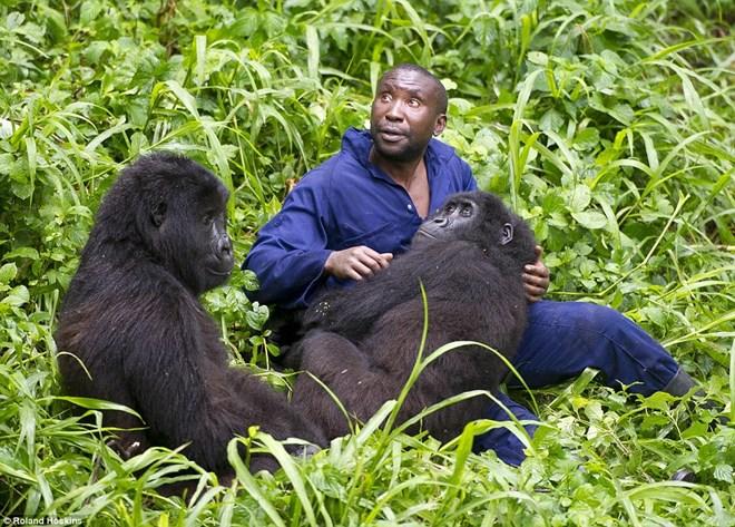 Tình bạn giữa khỉ đột khổng lồ và con người ở rừng sâu 5