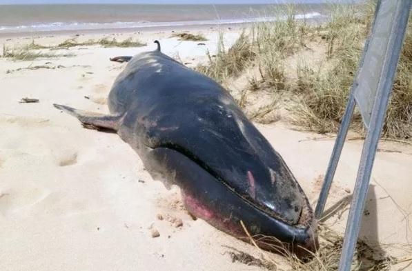 Video đầu tiên cận cảnh cá voi Omura hiếm gặp nhất hành tinh 1