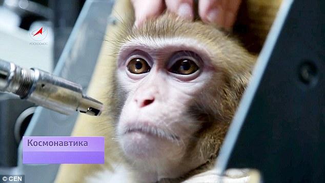 Nga huấn luyện khỉ để đưa lên sao Hỏa 1
