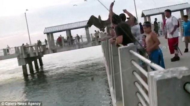 Video: Ngư dân giải cứu bồ nông mắc vào lưỡi câu 1