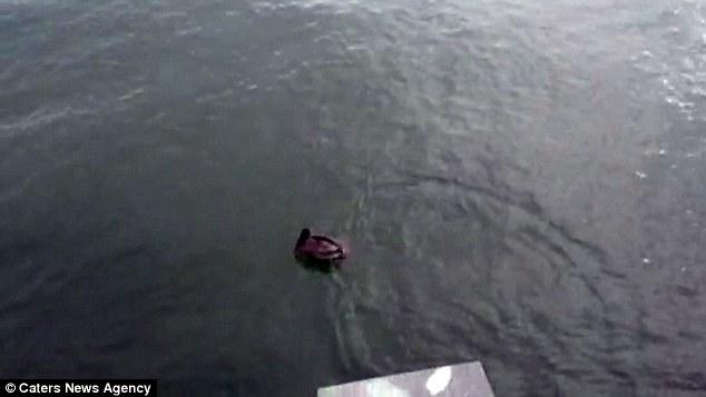 Video: Ngư dân giải cứu bồ nông mắc vào lưỡi câu 4