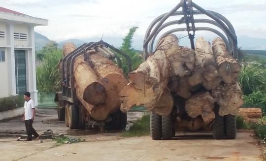 Bắt vụ vận chuyển gỗ lậu lớn nhất từ trước tới nay 1