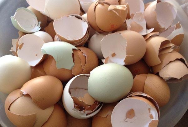 Vỏ trứng và công dụng bất ngờ ít biết  3