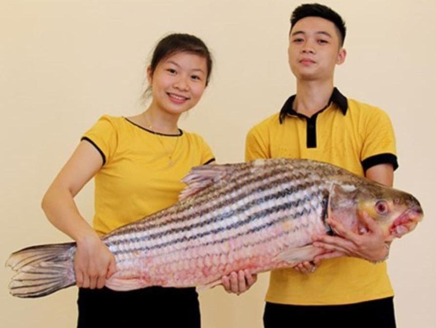 Cận cảnh cá Hô khủng được vận chuyển bằng máy bay về Hà Nội 2