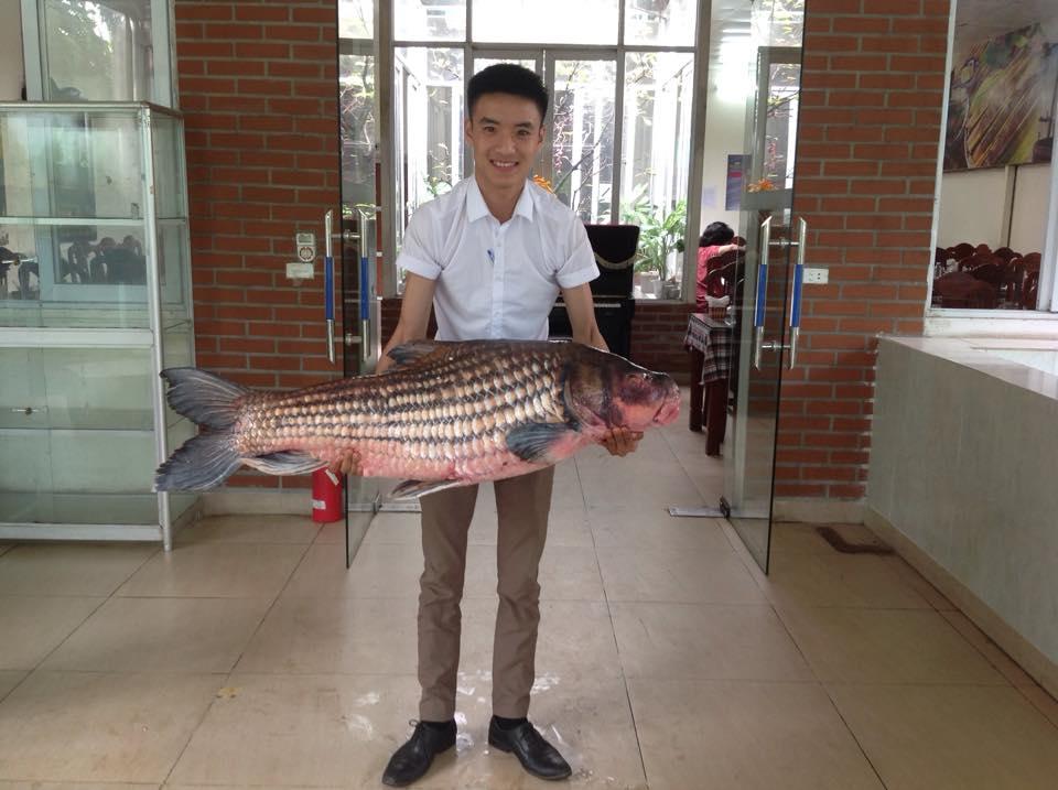 Cận cảnh cá Hô khủng được vận chuyển bằng máy bay về Hà Nội 4