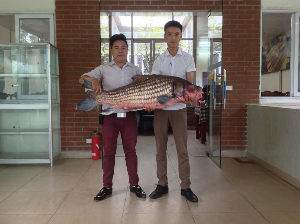Cận cảnh cá Hô khủng được vận chuyển bằng máy bay về Hà Nội 5