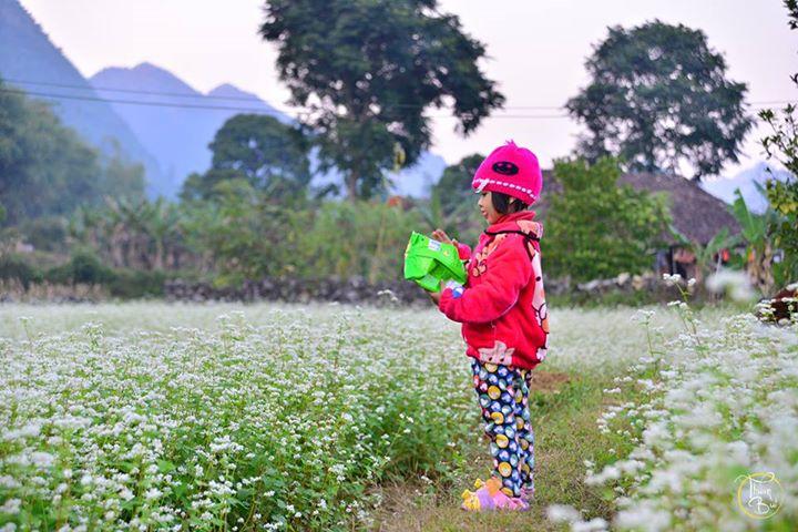 Cung phượt ngắm hoa tam giác mạch chỉ cách Hà Nội 180km 3