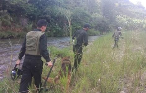 Đã bắt được hai tên cướp taxi, trốn trong rừng sâu 1