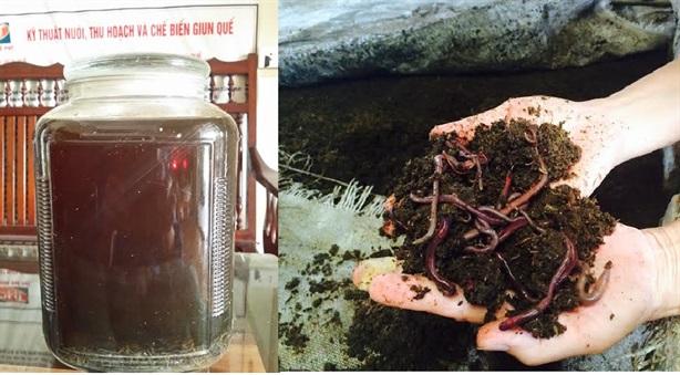 Hình ảnh Giun quế - từ thức ăn gia súc lên mâm cơm gia đình số 2
