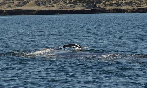 Giải mã nguyên nhân khiến hàng trăm con cá voi chết tập thể 1