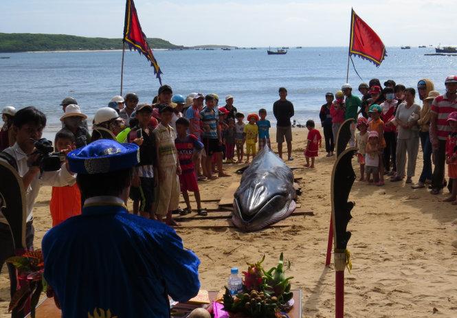 Phú Yên: Cá voi xanh dài 6m, nặng 1,5 tấn dạt vào bờ 7