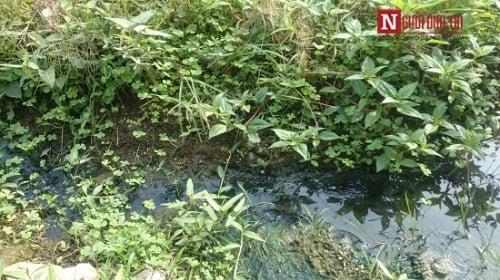 Kinh hãi rau muống tưới bằng nước cống ở Hà Nội 4