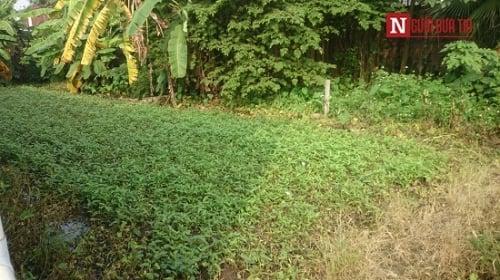 Hình ảnh Kinh hãi rau muống tưới bằng nước cống ở Hà Nội số 3