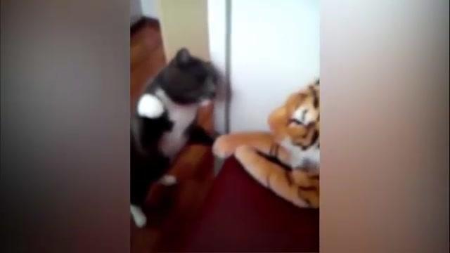 Video: Mèo nhà liều lĩnh tát tới tấp vào mặt hổ 1
