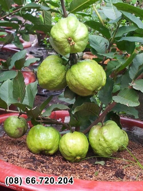 Nông dân trồng cây ăn trái siêu quả tham gia triển lãm hút khách  3