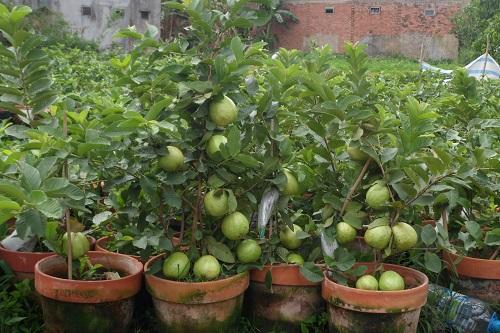 Nông dân trồng cây ăn trái siêu quả tham gia triển lãm hút khách  4