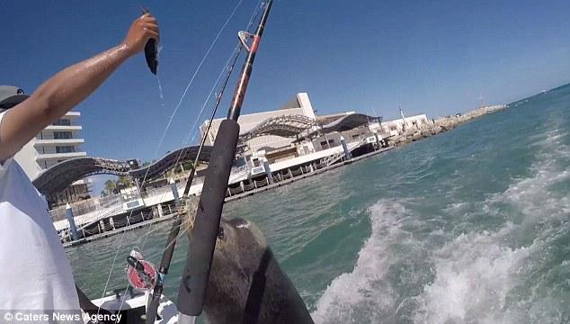Video: Sư tử biển bám đuôi thuyền xin thức ăn 1