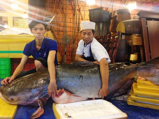 Bắt được cá tra nặng 200kg, cá trà sóc 'khủng' trên sông Mêkông  1