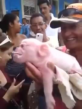 Video: Lợn mặt khỉ kỳ dị gây xôn xao 1