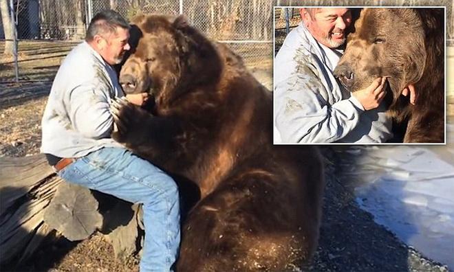 Thót tim cảnh người đàn ông để tay vào miệng gấu khủng 4