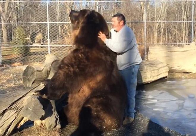 Thót tim cảnh người đàn ông để tay vào miệng gấu khủng 1