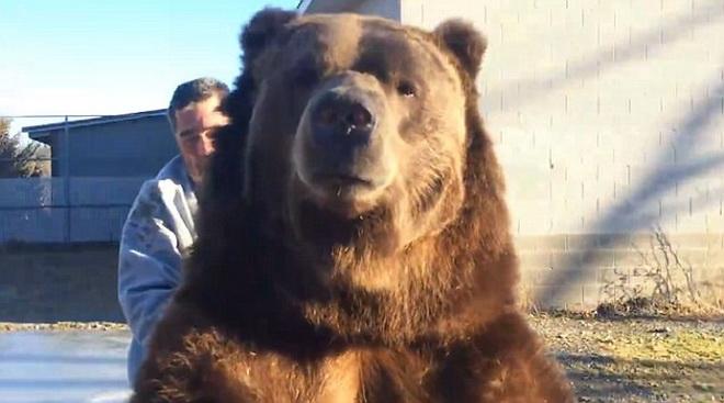 Thót tim cảnh người đàn ông để tay vào miệng gấu khủng 2