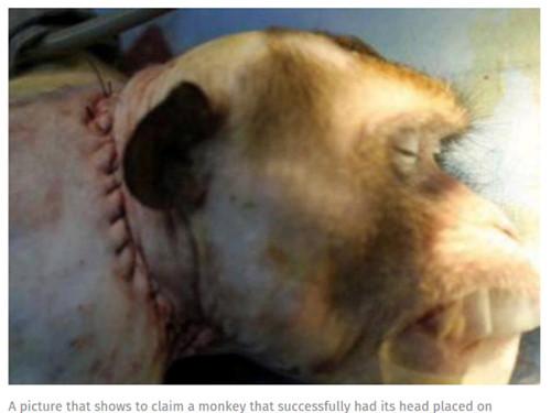 Công bố video cấy ghép đầu khỉ thành công ở Trung Quốc 1