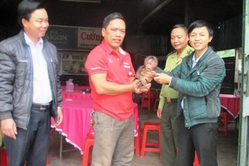 Giải cứu cá thể Khỉ mặt đỏ quý hiểm ở Quảng Bình 1