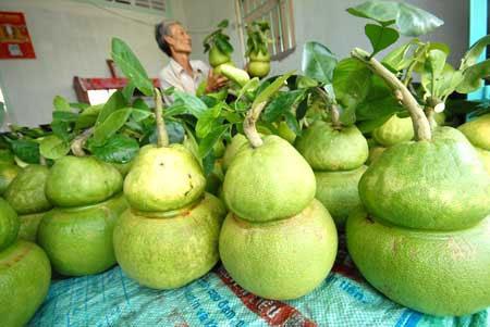 Nở rộ thị trường hoa quả độc – lạ giá tiền triệu 4