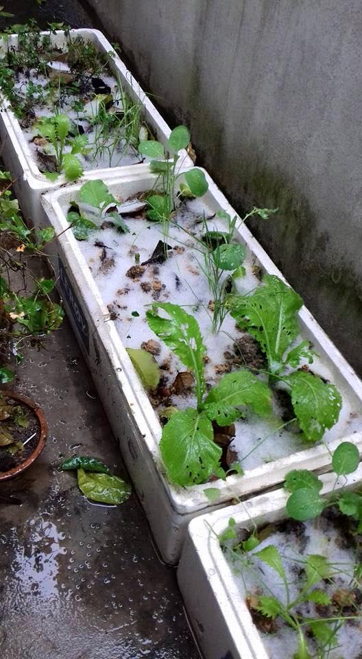 Tuyết rơi trắng nhiều nơi ở Lạng Sơn 7