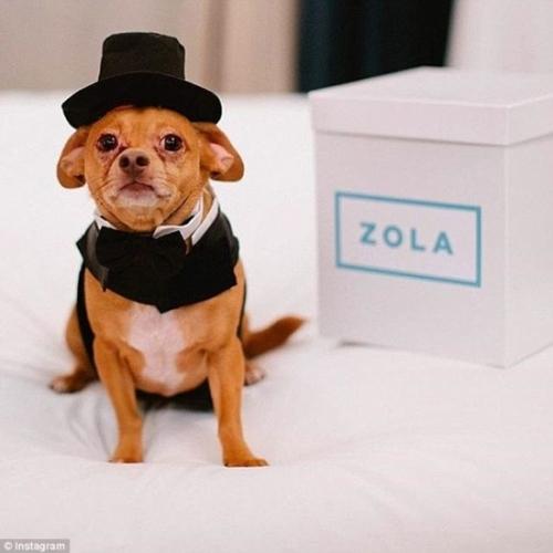 Đám cưới hàng tỷ đồng của cặp chó nổi tiếng Instagram 3