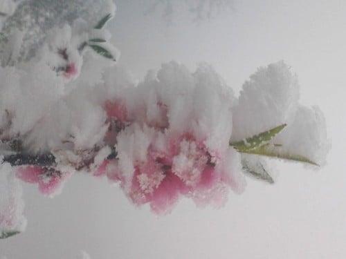 Tuyết phủ dày 20cm ở Nghệ An trắng xóa như Châu Âu 1